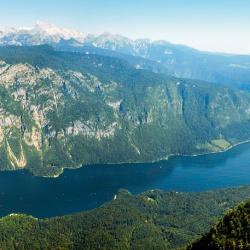 Slowenia Alpy Vogel Bohinj.jpg
